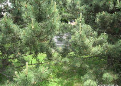 Csomád II.vh emlékmű 2008.05.26.küldő-Kályhás