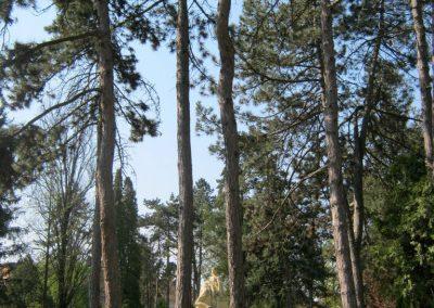 Csongrád I. világháborús emlékmű 2015.04.12. küldő-Emese